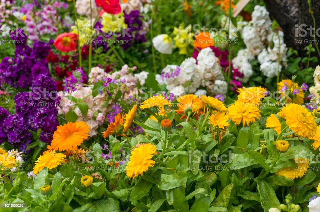 Bright and colorful spring flowers nature background stock photo