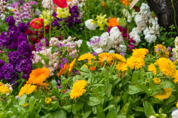 bright and colorful spring flowers nature background - клумба стоковые фото и изображения