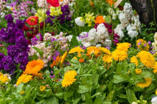 鮮豔多彩的春季花卉自然背景 - 花圃 個照片及圖片檔