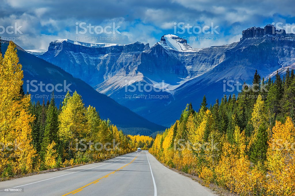 Bright aspen and birch beside the highway stock photo