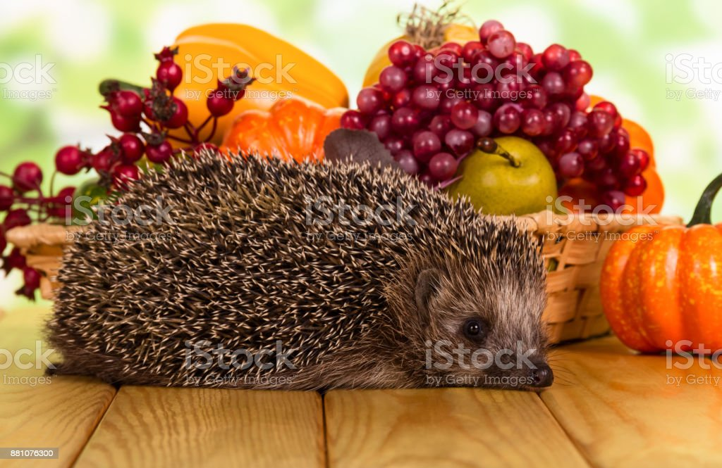 Bright autumn fruits and vegetables in the basket and hedgehog on table stock photo