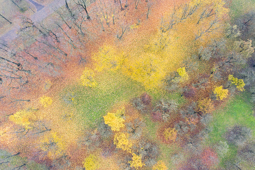 bright autumn landscape in morning fog top view