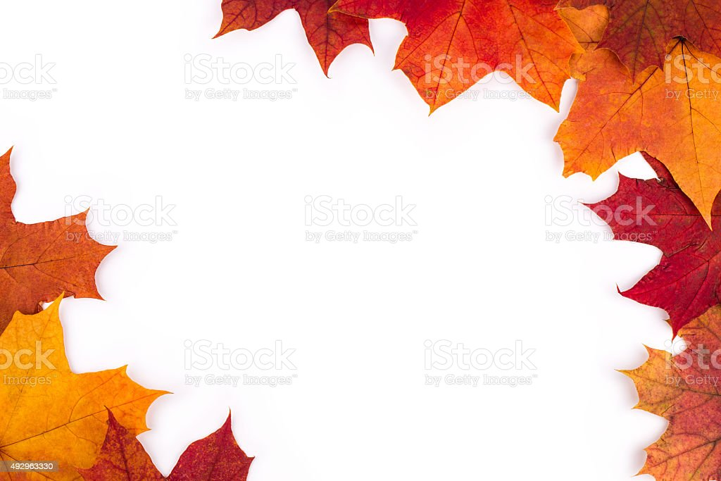 Bright autumn leaves of a maple on a white background stock photo