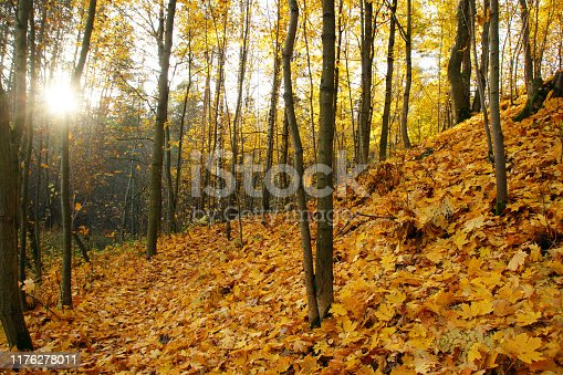 Bright autumn leaves on the slope of a small hill with trees in the park.