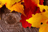 Four (4) colorful autumn leaves resting on a weathered piece of wood.