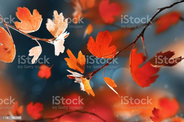 Photo of Bright  autumn summer natural background. Red and orange leaves  in the autumn forest. Magical nature og autumn.