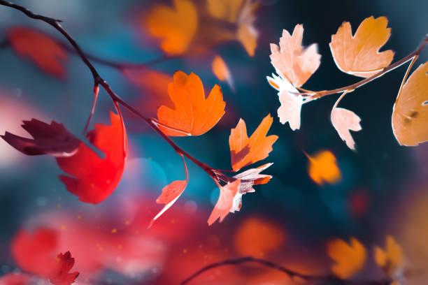 fundo natural do verão brilhante do outono. folhas vermelhas e amarelas na floresta do outono. natureza mágica og outono. - outono - fotografias e filmes do acervo
