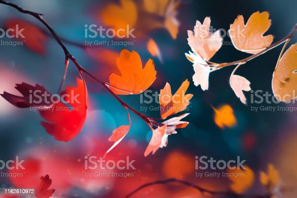 Photo of Bright  autumn summer natural background. Red and yellow leaves  in the autumn forest. Magical nature og autumn.