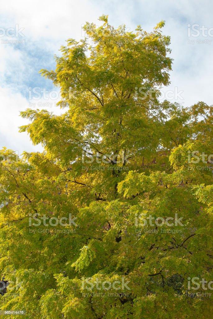 Bright autumn tree royalty-free stock photo