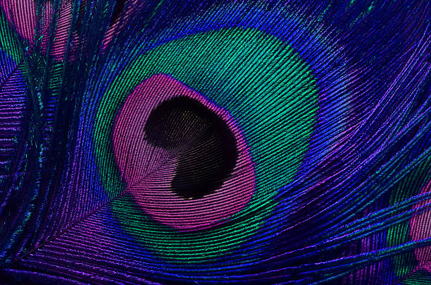 bright background the pattern of a peacock's tail bright background the pattern of a peacock's tail peacock feather stock pictures, royalty-free photos & images