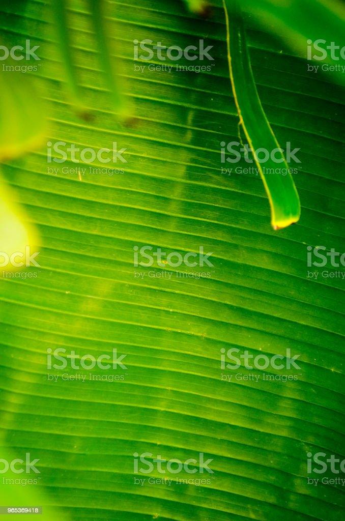 Bright Banana Leaf Background zbiór zdjęć royalty-free