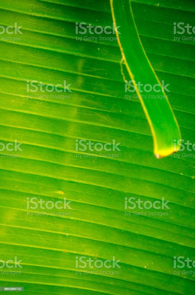 Vive fond de feuille de bananier - Photo de Abstrait libre de droits