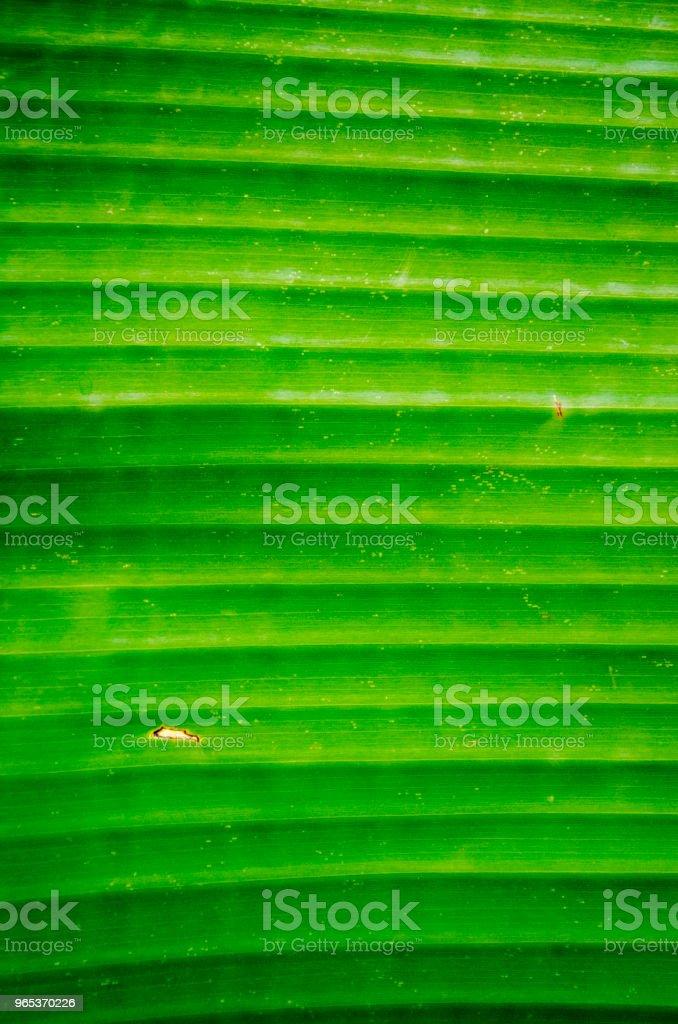 Helle Bananenblatt Hintergrund - Lizenzfrei Abstrakt Stock-Foto