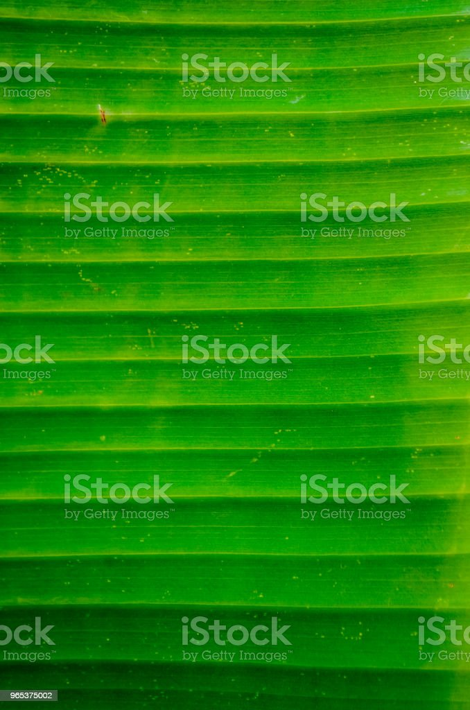 Bright Banana Leaf Background zbiór zdjęć royalty-free
