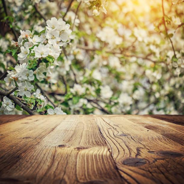 밝은 아름다운 빛 피는 시골 사과 나무 골목 화창한 봄 공원 푸른 하늘 위에 첫 번째 새벽 광선과 프레임 질감 나무 패널 바닥 배경 벽 내부 방 내부에 스톡 사진