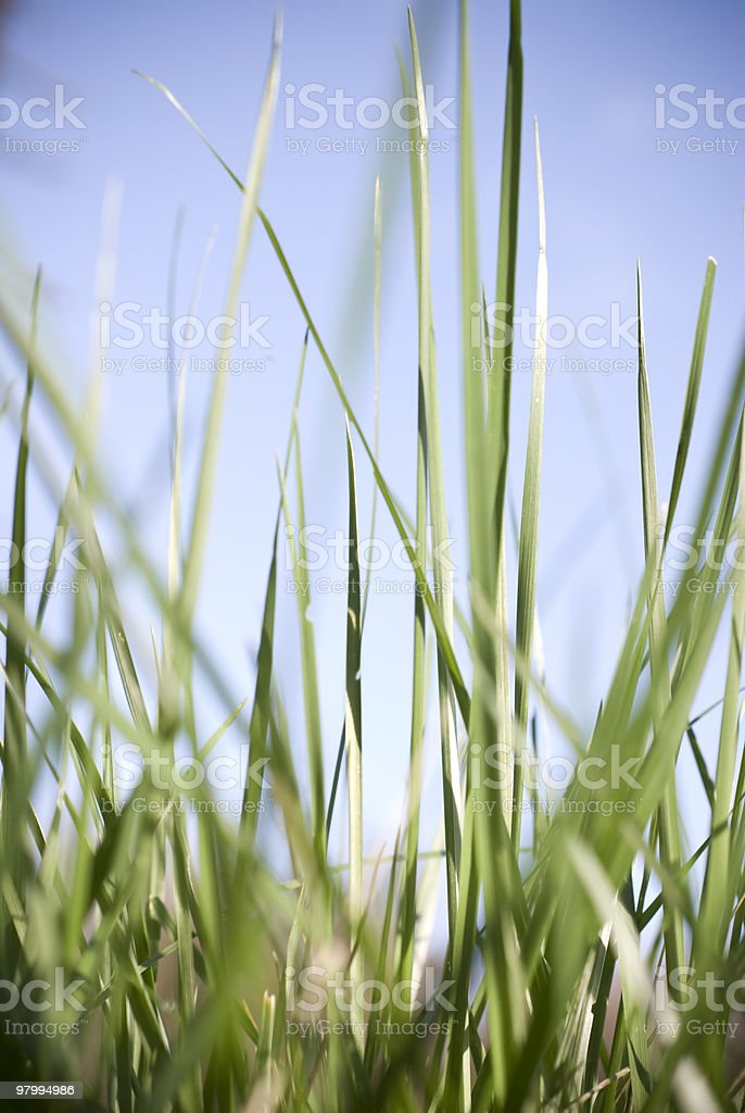 Bright Blades Of Grass royalty-free stock photo