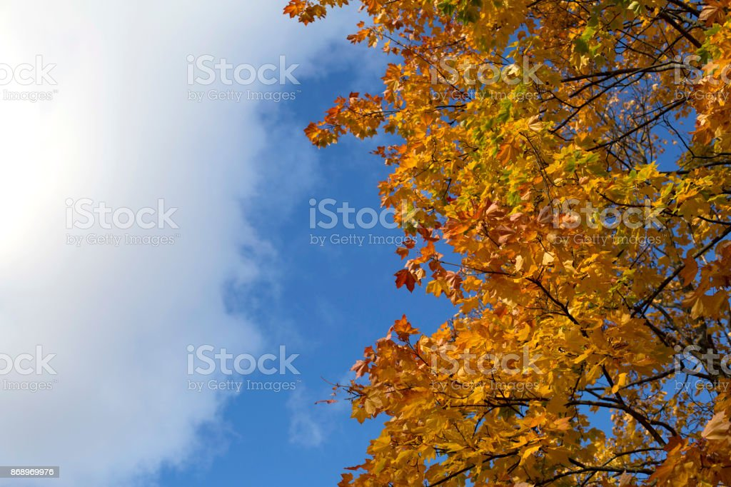 Bright blue autumn sky and orange maple tree background royalty-free stock photo