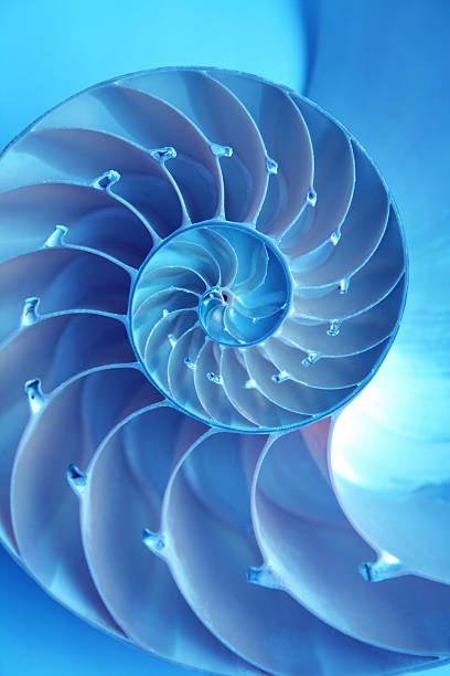 a bright blue nautilus shell on a blue background - nautilus stock pictures, royalty-free photos & images