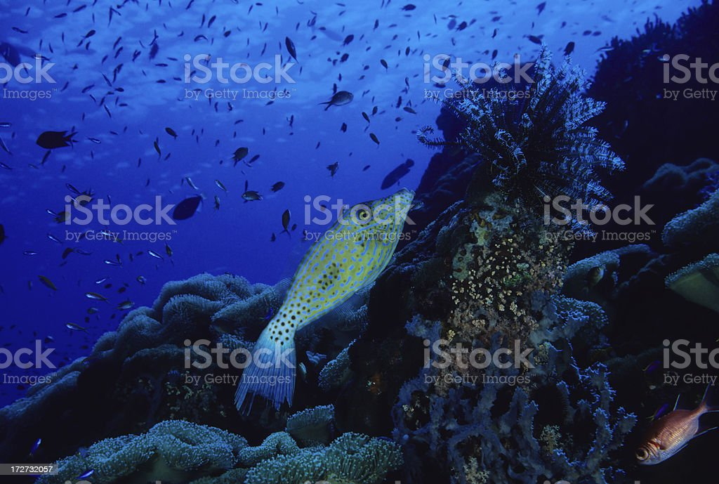 Bright Blue Reef royalty-free stock photo