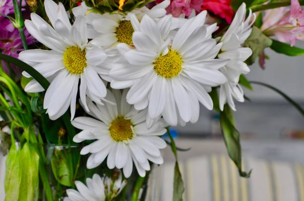 Bright  Bouquet of Flowers stock photo