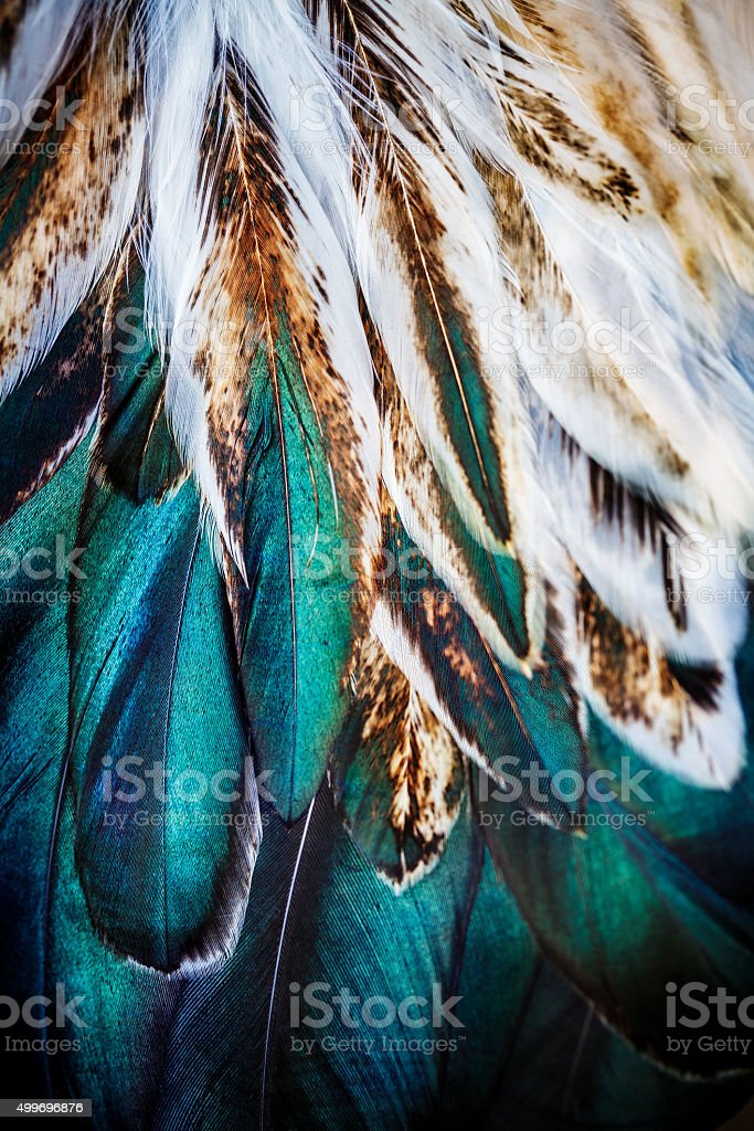 Bright brown feather group of some bird stock photo