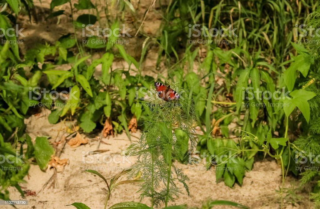 Bright butterfly on a green bush. stock photo