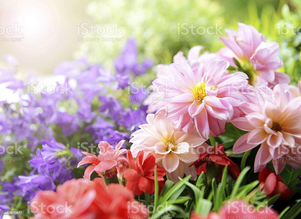 Dahlien, carnations und Veranstaltungsraum