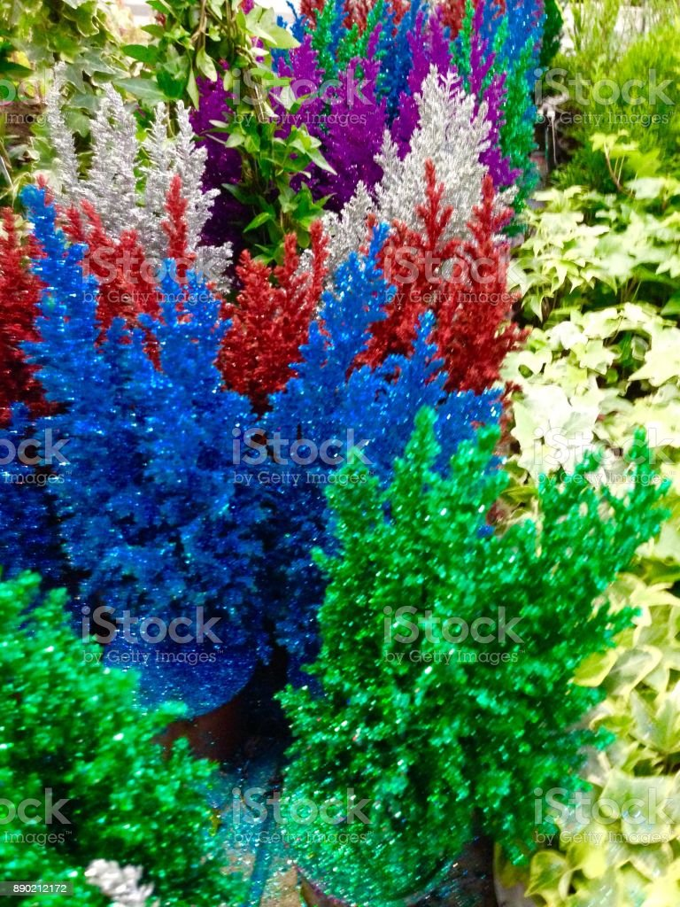 Bright Colored Mini Christmas Trees stock photo | iStock