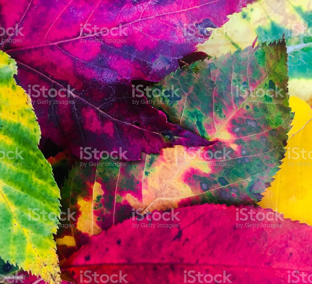 Bright Colorful Fall Leaves stock photo