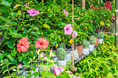 Bright colorful flowers in the greenhouse with Different flowers in a nursery - outdoors