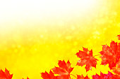 Blurred background. autumn landscape with bright colorful leaves. Indian summer.