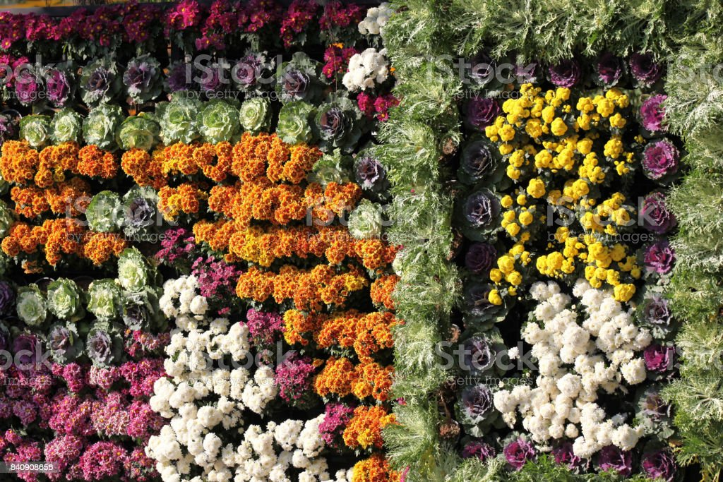 Bright colorful multicolored flowers, Thailand stock photo