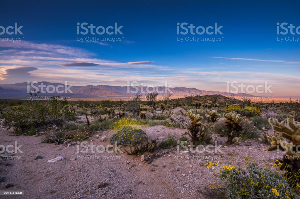 Bright Colorful Nature Landscape of Wildflowers and Cactus at Sunset stock photo