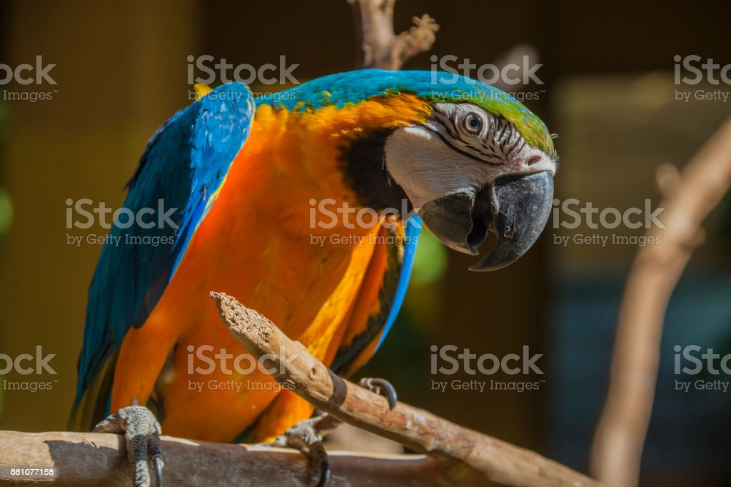 Bright colorful parrot royalty-free stock photo
