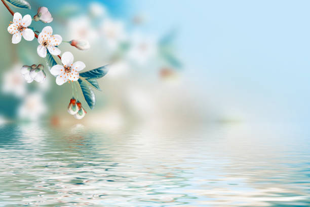 bright colorful spring flowers - sakura background stock photos and pictures