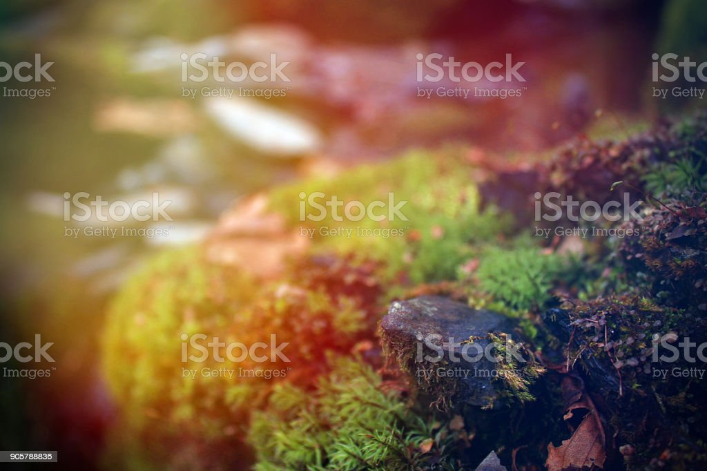 Bright Colorful Sunrise Over a Stone Covered with Moss or Lichen in the Forest stock photo