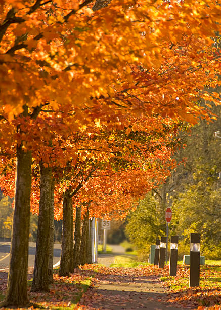 Bright Colors of Autumn stock photo