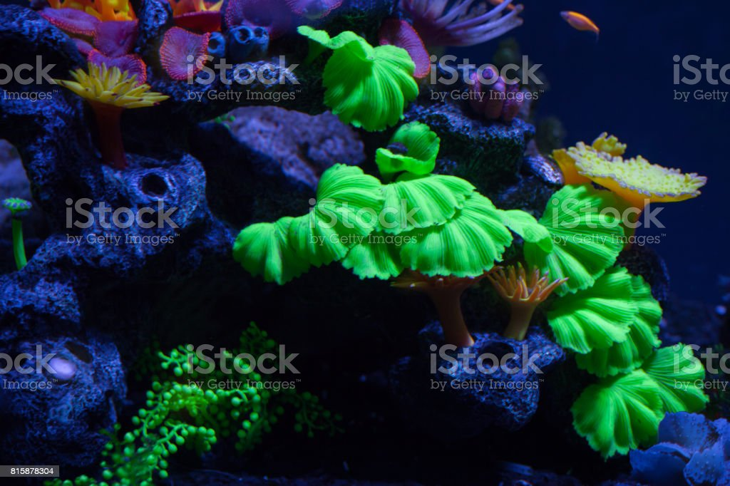 Bright corals on the bottom stock photo
