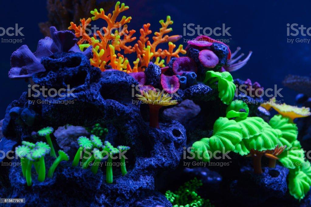 Bright corals under water stock photo
