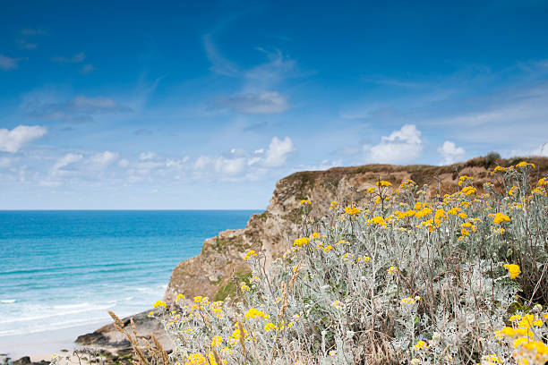 bright cornish cliffs during june - cornwall stock pictures, royalty-free photos & images