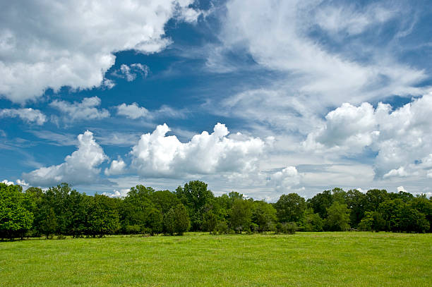 "Bright country sky in spring ""Looking out over a southern Oklahoma farm, green grass leads up to a small tree line, with deep blue sky and cumulus clouds overhead. Shot at F18 with a circular polarizer."" treelined stock pictures, royalty-free photos & images"