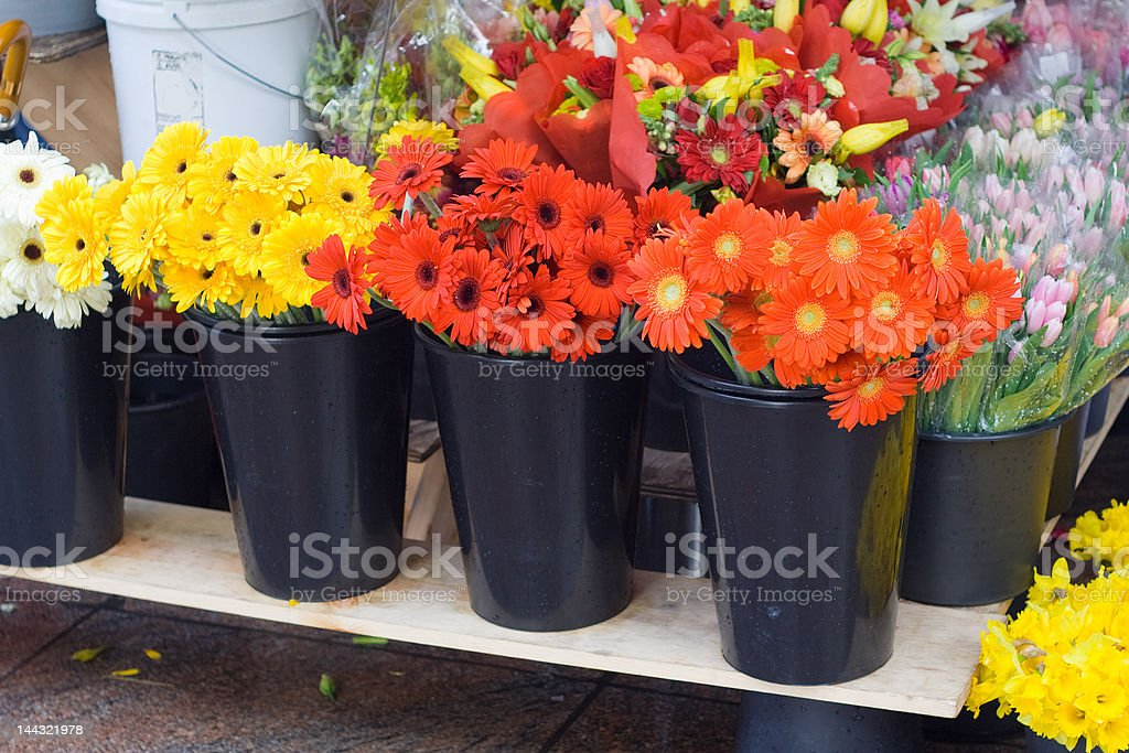 Bright Daisy Flowers For Sale at Flower Stand royalty-free stock photo