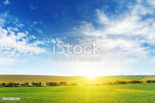 Bright dawn over corn field. Copy space