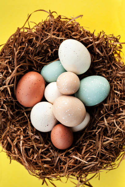 Bright Easter Holiday eggs in the nest on yellow background, spring celebration stock photo