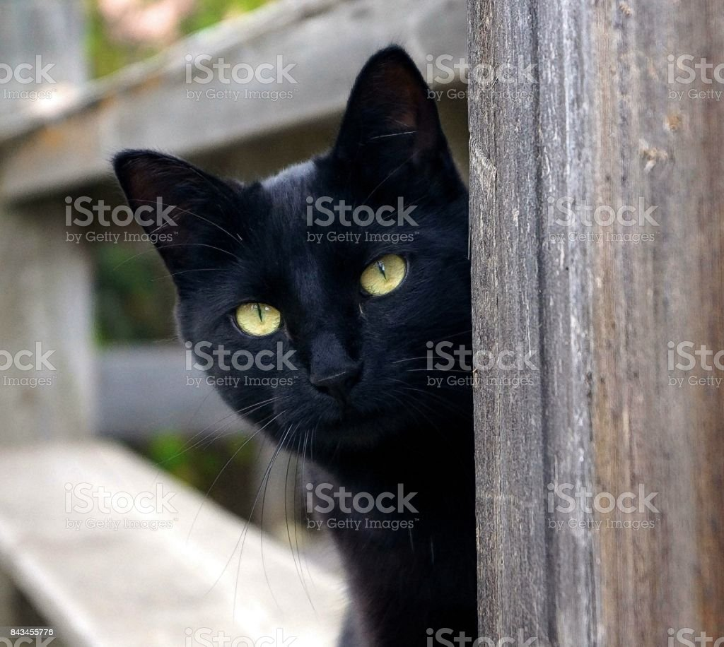 Bright Eyed Black Cat stock photo