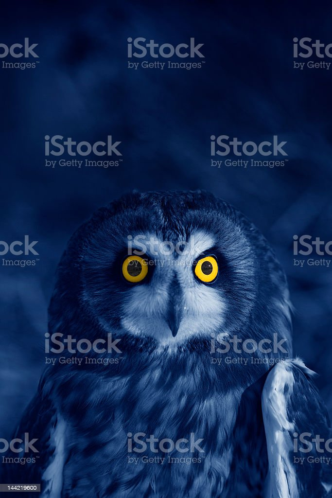 A bright eyed blue owl at night stock photo