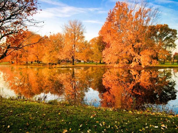 Bright fall colors reflect on a pond stock photo