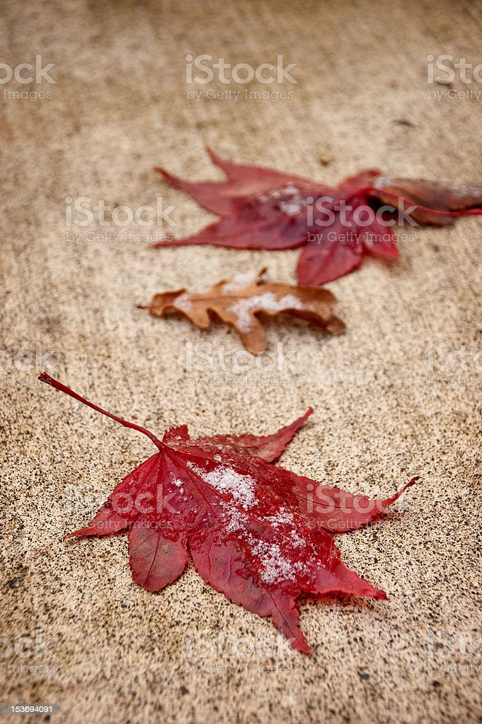 Bright Fall Leaves in Winter royalty-free stock photo