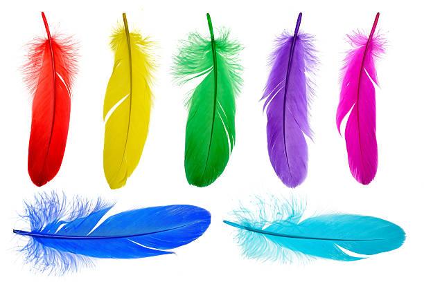 brillante sfondo di piume - piume colorate foto e immagini stock