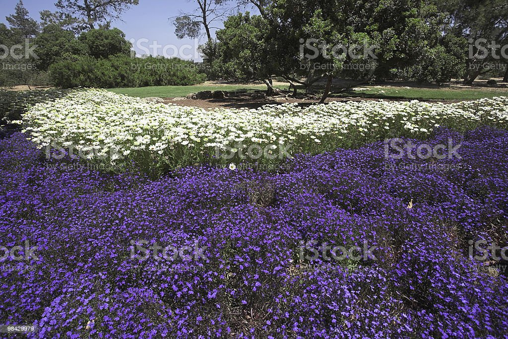 Bright flower beds royalty-free stock photo